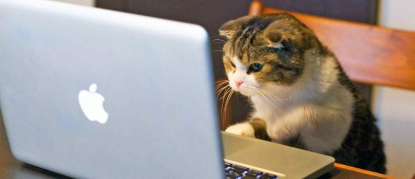 cat-mac-1040x450